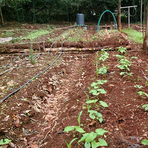 Concevoir des jardins en permaculture