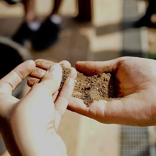 Le sol : Plantes Bio-Indicatrices  et Diagnostic des Sols