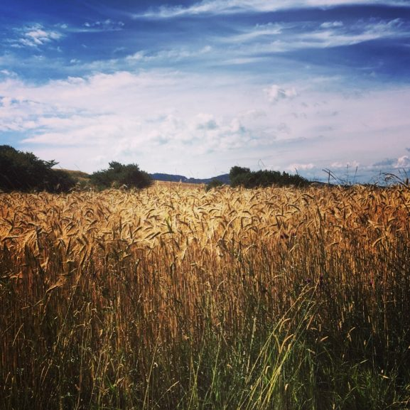Permaculture : un réseau mondial en voie d'expansion